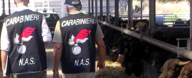 Farmaci ai bovini per aumentare produzione di latte: sequestri e denunce