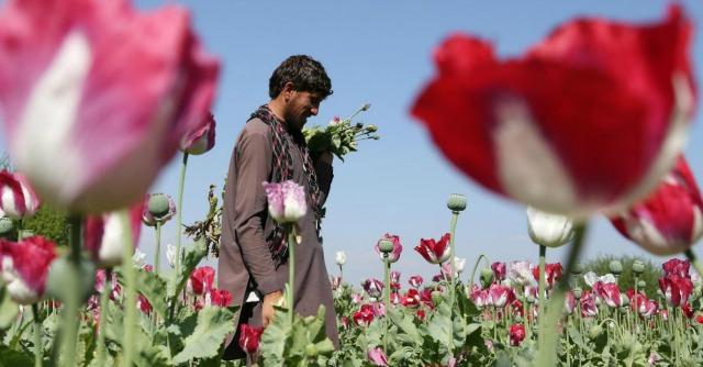 "Afghanistan, ""campi di oppio, 2013 record. Inutili i 7 mld spesi da Usa per contrasto"""