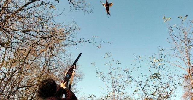 Cacciatore spara e colpisce all'occhio donna incinta: aperta inchiesta