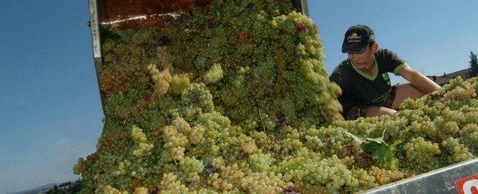 Pavia, vino spacciato per Pinot grigio. Maxi frode da 20 milioni di euro
