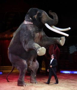elefante-circo-wiki