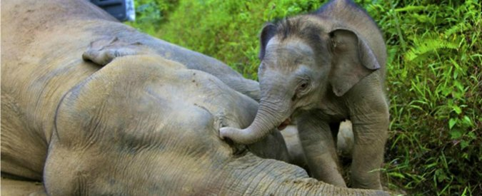 World Wildlife Day, ovvero brutti anni per le specie protette