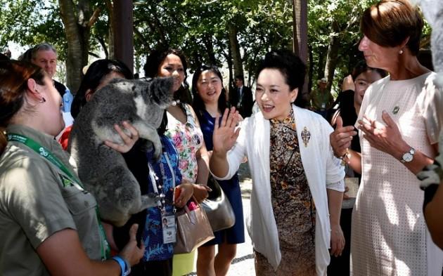 Peng Liyuan-Koala-g20