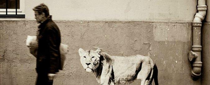 """Transizioni 2014, a Bologna debutta il festival di """"Fotografia in movimento"""""""
