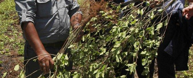 """Cocaina, """"la pianta di coca resisterà ai cambiamenti climatici"""""""