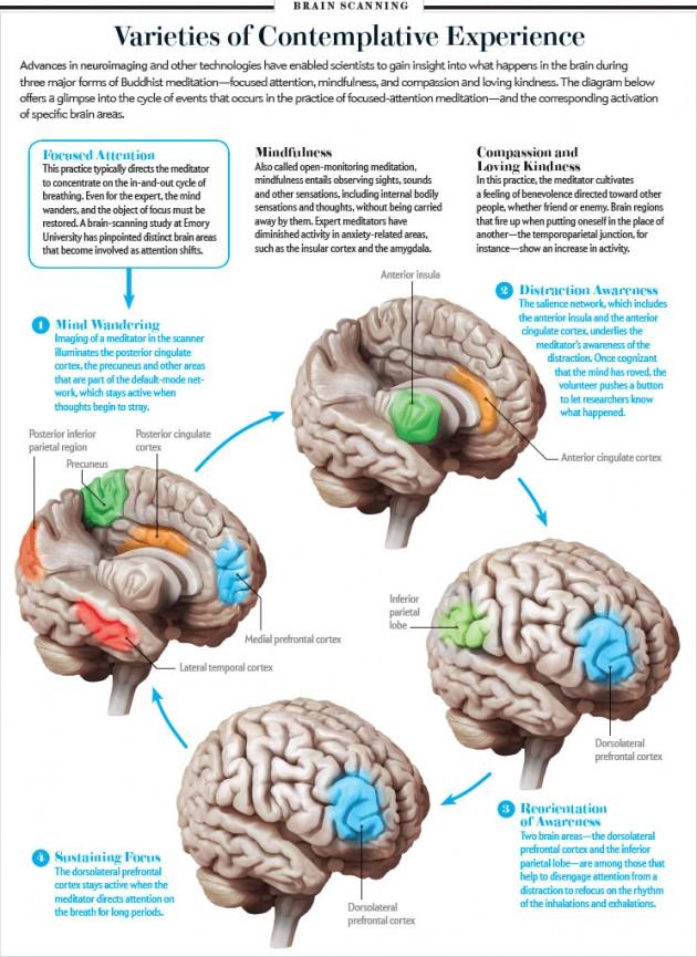 aree del cervello coinvolte nella meditazione - Scientific American