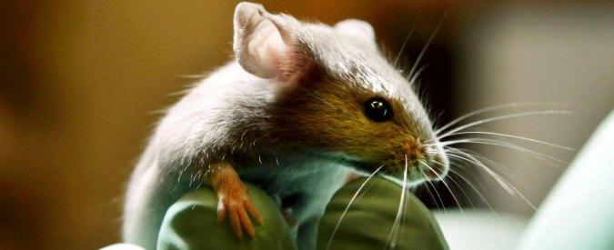"""Ricerca, """"test sugli animali in grave ritardo"""". Lettera al ministro Lorenzin"""