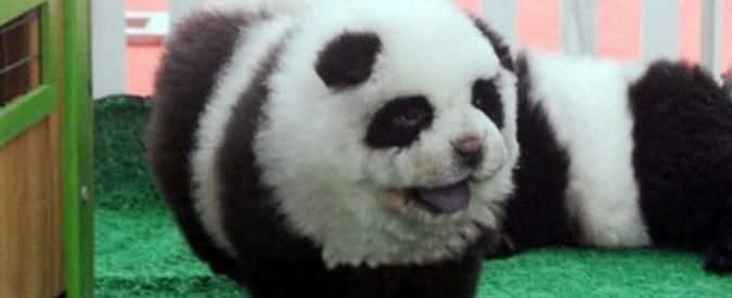 Circo Orfei, blitz della Forestale: due cani truccati da panda