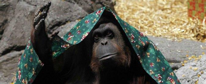 Argentina, l'orango Sandra sarà libera. Concesso l'habeas corpus dalla Cassazione