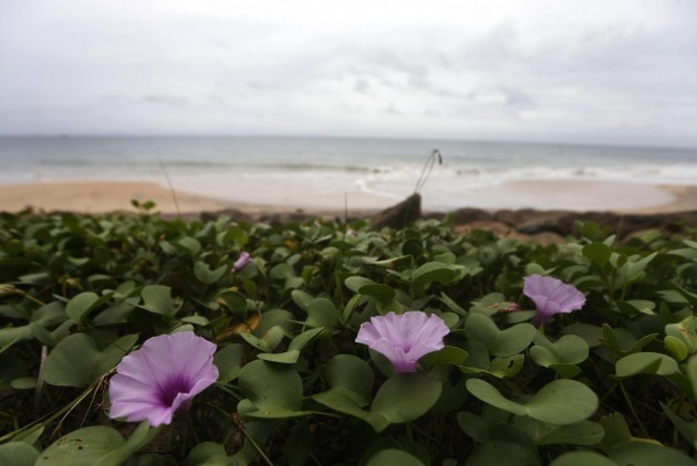 Flowers are seen on the beach in Seenigama
