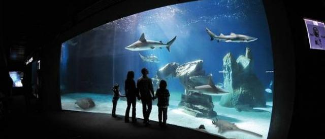 """""""Blue Food-Green Future"""", un anno di iniziative per conoscere la filiera del pesce"""