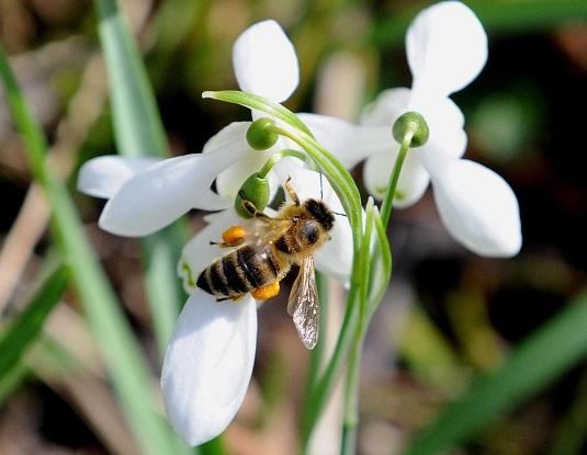 moria delle api e pesticidi