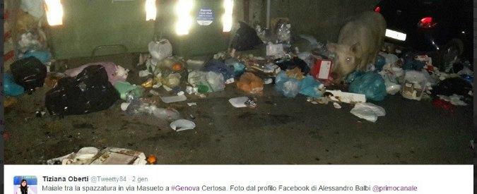 Emergenza rifiuti a Genova, maiali e spazzatura in strada durante le Feste