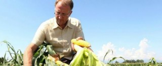 """""""Mais ogm non è rischioso per salute umana"""" e l'agricoltore Fidenato: """"Ora farò ricorso contro lo Stato"""""""