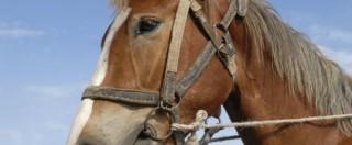 Carne, dopo lo scandalo della lasagne al cavallo anche il ripieno sarà tracciabile