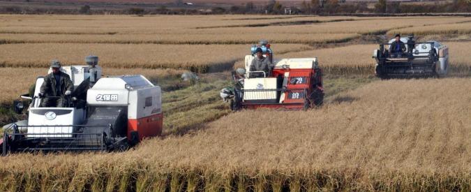 """La Cina ha """"fame"""": punta sugli Ogm e pensa a nuove aziende agricole"""