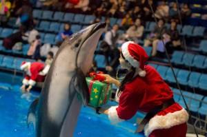 Tokyo, lo spettacolo natalizio dei delfini