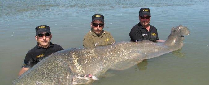 Pesce siluro record, due pescatori multati per averlo liberato nel Po