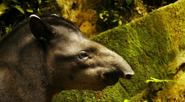 Ecuador e conflitti d'interesse: la questione ambientale