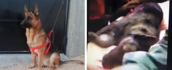 """Tunisia, i terroristi uccidono anche Akil, il cane poliziotto: """"E' morto da eroe"""""""