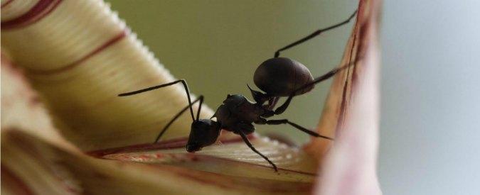 Dna, il segreto dell'altezza svelato anche grazie allo studio delle formiche