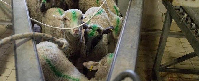 Pisa, flash-mob animalista: 50 agnelli di cartone davanti alla Torre