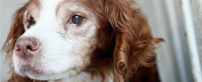 """Ragazza è disabile, le negano l'adozione di un cane: """"E' impegnativo"""""""