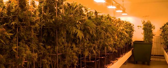 "Marijuana, la svolta della Svizzera: ""Sì a progetto pilota per Cannabis social club"""
