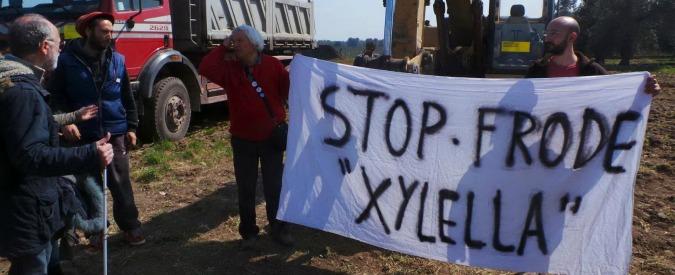 Xylella, presidio ambientalista: ruspe bloccate. Ma primi sette ulivi abbattuti