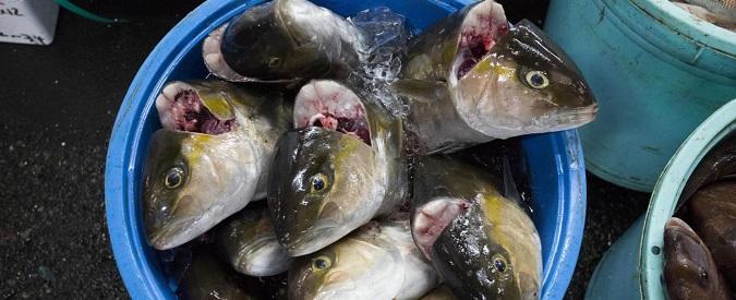 Pescatori in protesta a Montecitorio, qualcuno ne parli