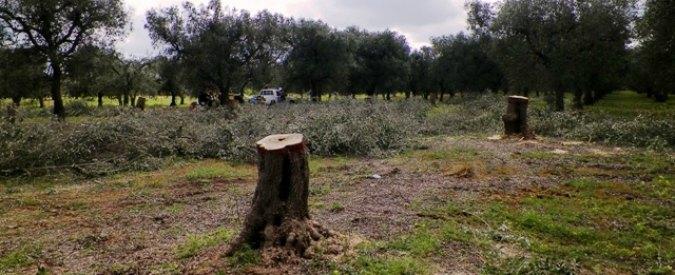 """Xylella, Regione Puglia: """"Terreni colpiti non edificabili. Misura contro speculazione edilizia"""""""