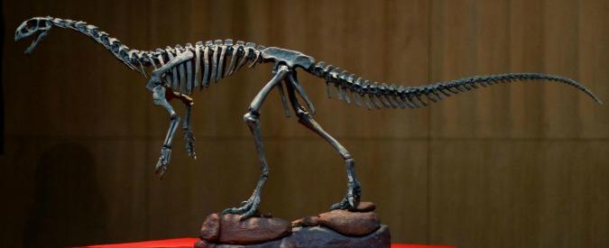 Dinosauri, scoperto Chilesaurus: il cugino del T-Rex che mangiava erba