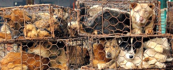 """Cina, ong contro il Festival di Yulin: """"Ogni anno macellati e mangiati 10 mila cani"""""""