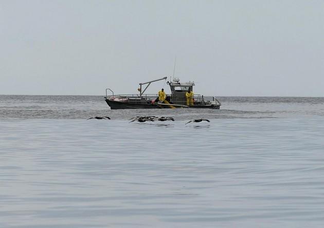 California, continua la pulizia delle spiagge dal petrolio