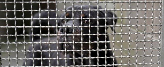 """Confiscati e affidati al comune 53 cani. """"Costano troppo, rischiamo default"""""""