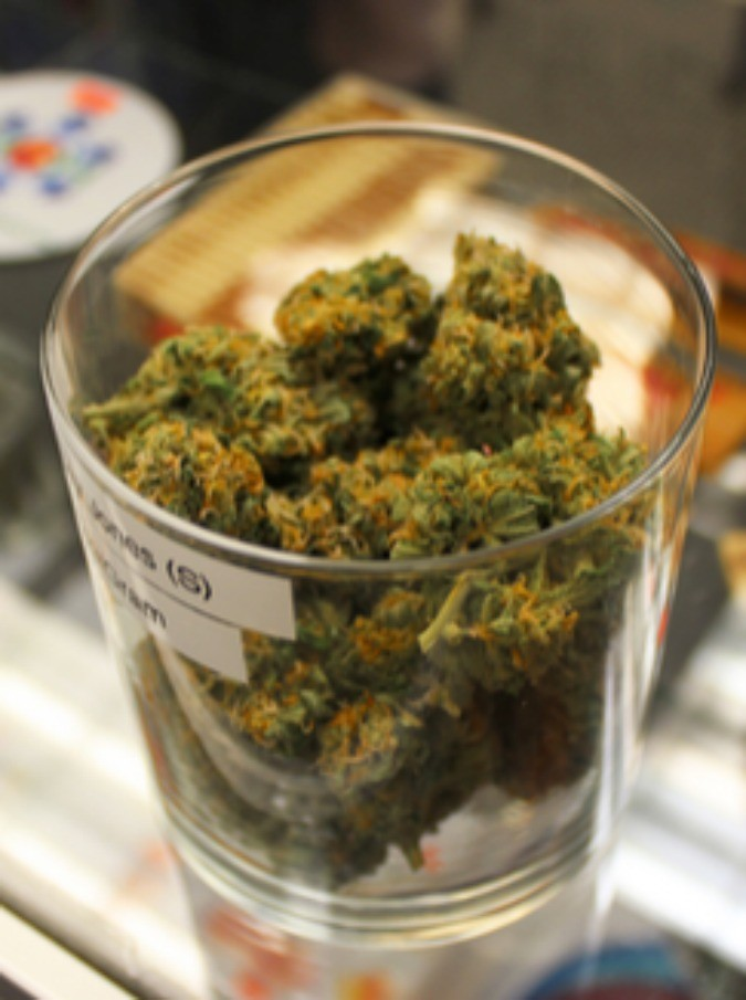 Marijuana Nasce Il Primo Cannacamp Il Resort Dove Si Può Fumare
