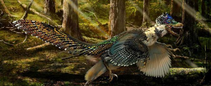 """Dinosauri, in Cina scoperto """"cugino"""" alato del Velociraptor"""