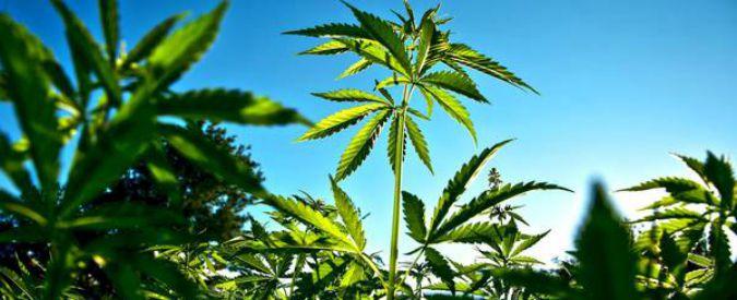 Legge di Bilancio, emendamenti: 'Creare monopolio statale sulla cannabis e usare entrate per poveri e terremotati'