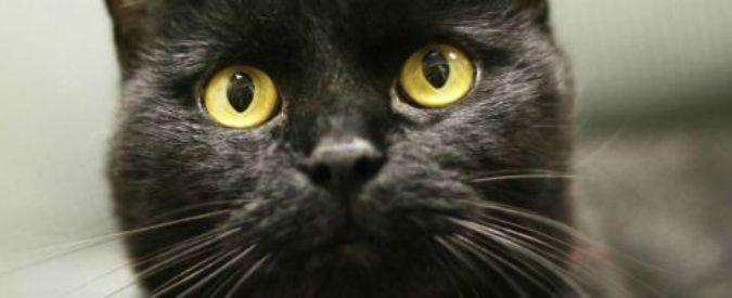 Australia, governo annuncia piano per uccidere due milioni di gatti selvatici