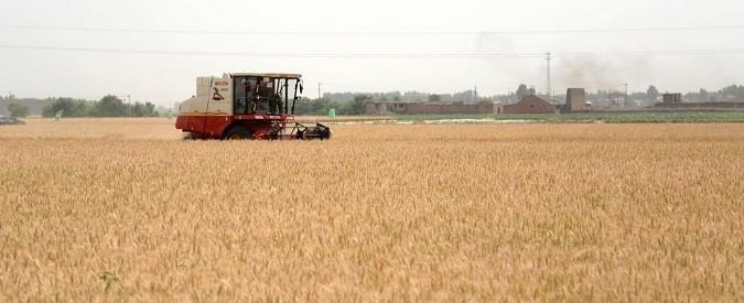 Canada, il grano diventa arabo. E il governo tenta di correre ai ripari (almeno in periferia)