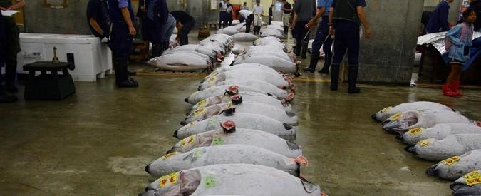 Namibia, l'airgun che ha affossato l'industria dei tonni