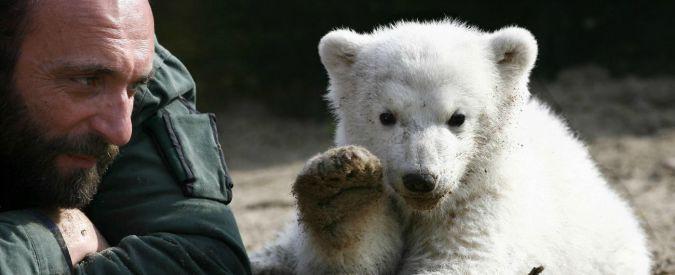 Orso Knut, polemica in Germania. Giornali violano embargo su cause morte