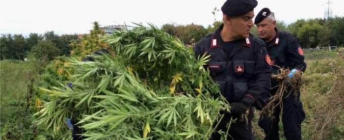 Marijuana, maxi piantagione a Bologna: scoperte piante di 2 metri dal valore di 400mila euro