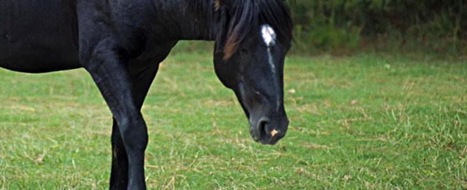 Reggio Emilia, ecco la Collina dei cavalli: la seconda vita per gli animali destinati al macello
