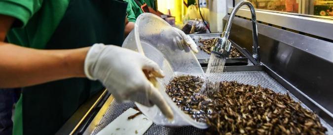 Cibo, alghe e insetti sulle tavole degli europei: arriva il via libera da Strasburgo
