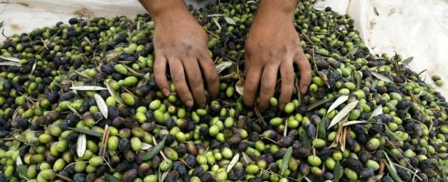 olive 675
