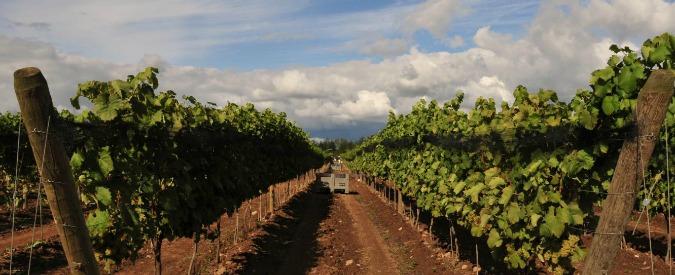 Vini, l'Italia nel 2015 torna primo produttore al mondo superando Francia