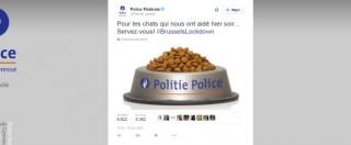 """Bruxelles, belgi postano gattini su Twitter per """"aiutare"""" la polizia. Che ringrazia con una ciotola di croccantini (FOTO)"""