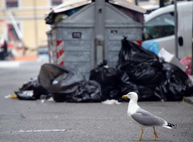 Spazzatura in strada a Livorno