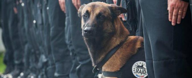 Blitz a Saint-Denis, commozione sui social per Diesel: il cane poliziotto morto